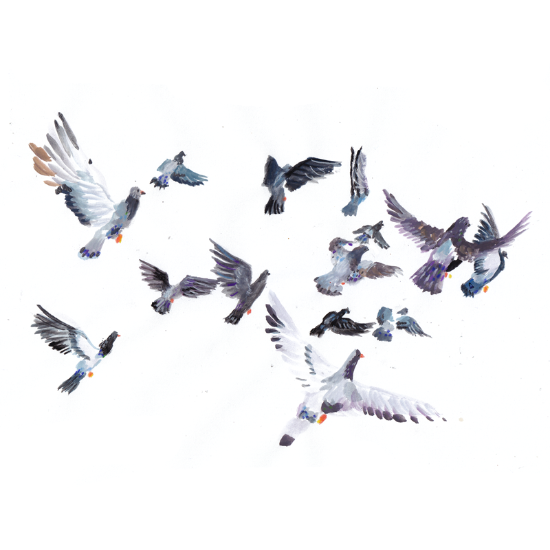 pigeon_fliock.png