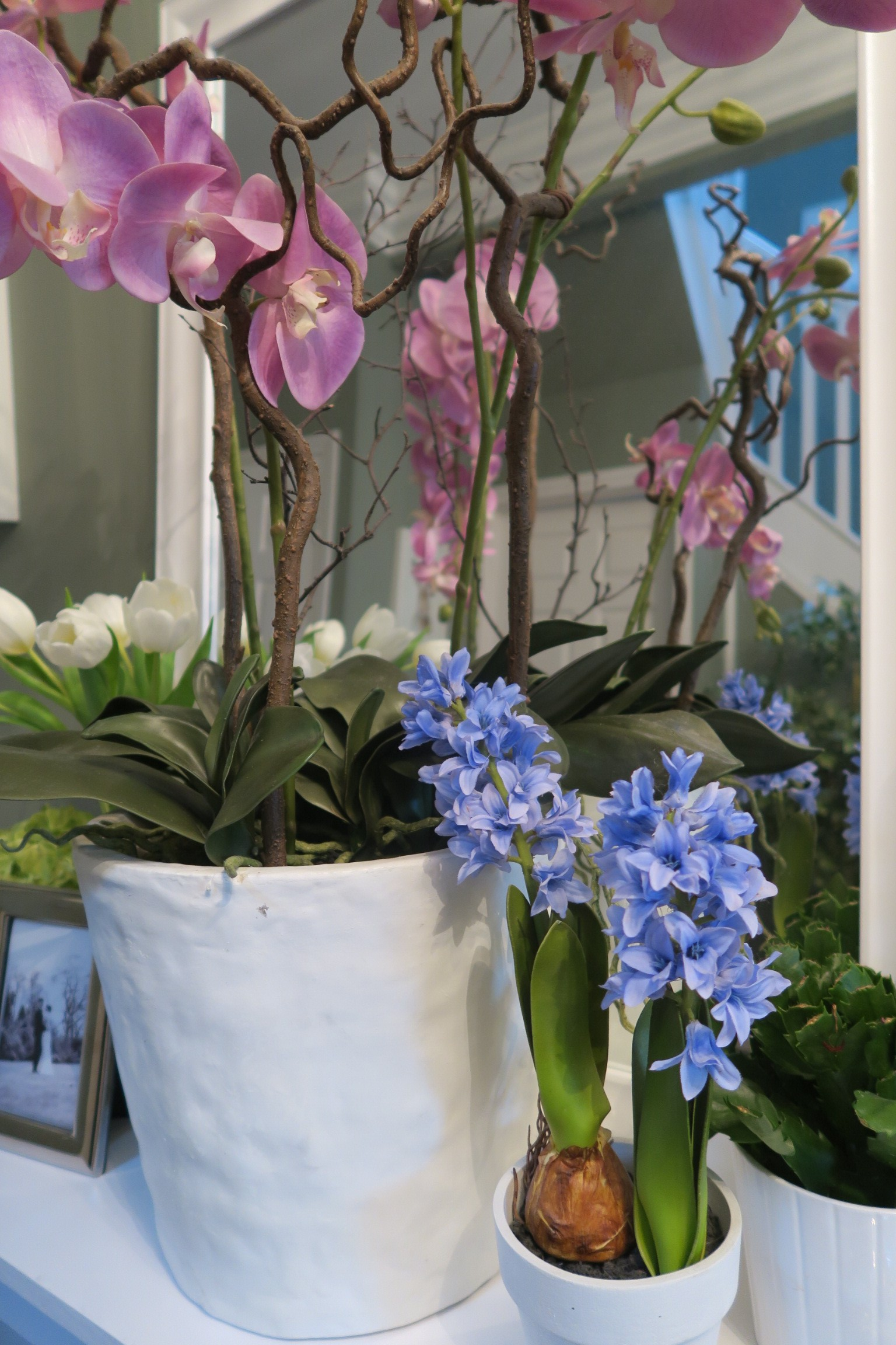 My faux hyacinth (which even managed to fool some bees) and my huge orchids.