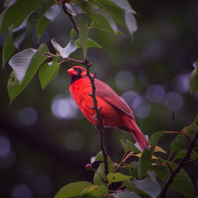 Sarah Barsness. Birds named for colors, like the Northern Cardinal, are easily recognizable.
