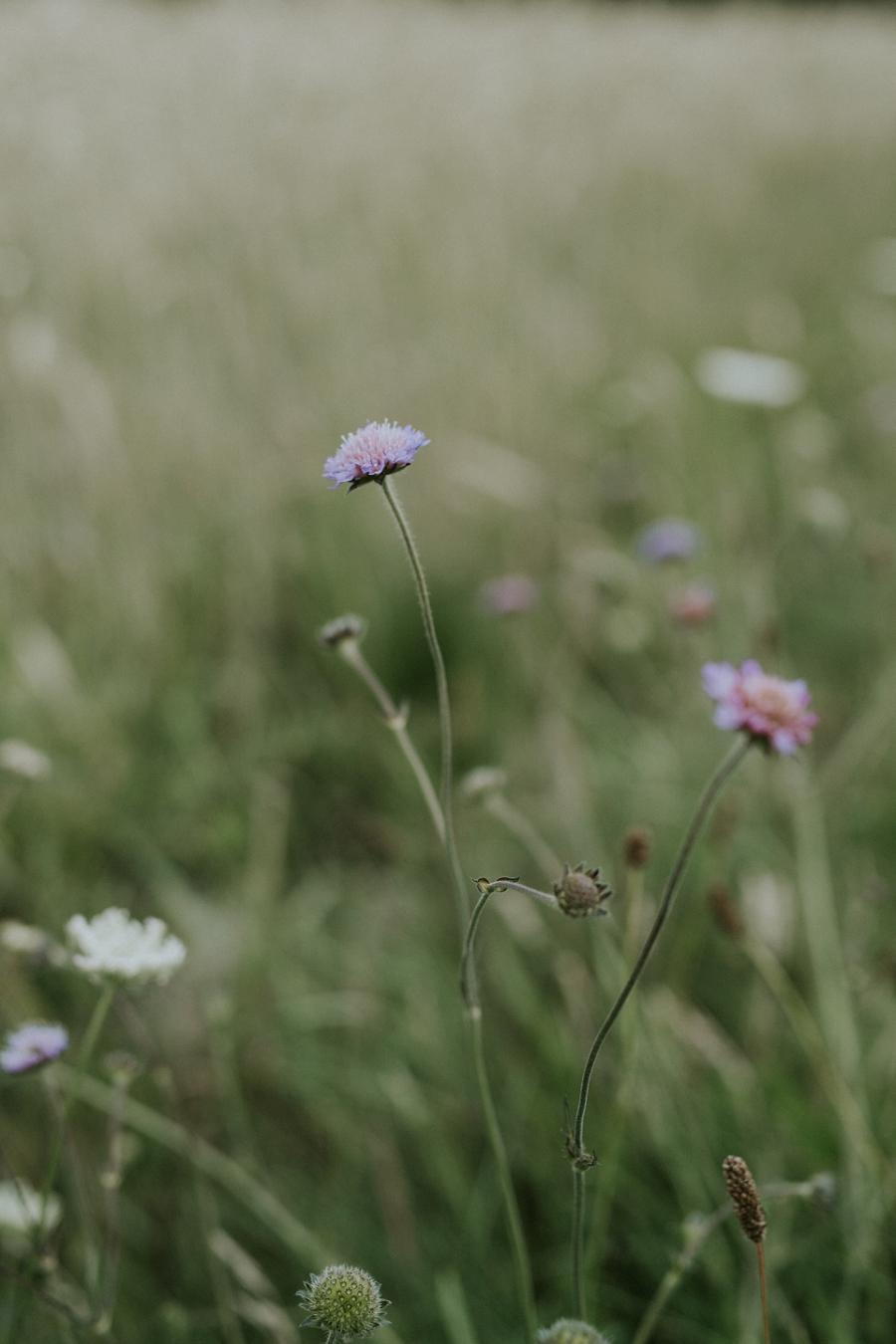 De fineste detaljer fra Camilla Jørvads besøg hos mig sidste sommer.Se mere på www.camillajorvad.com