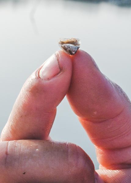 Shootingpoint_oysters_virginia (1 of 4).jpg
