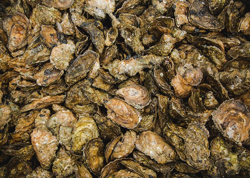 Shootingpoint_oysters_virginia (2 of 4).jpg