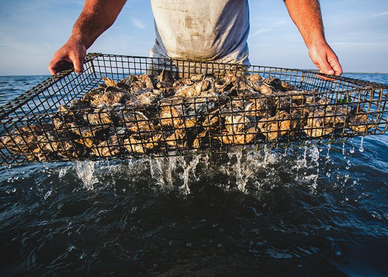Shootingpoint_oysters_virginia (4 of 4).jpg
