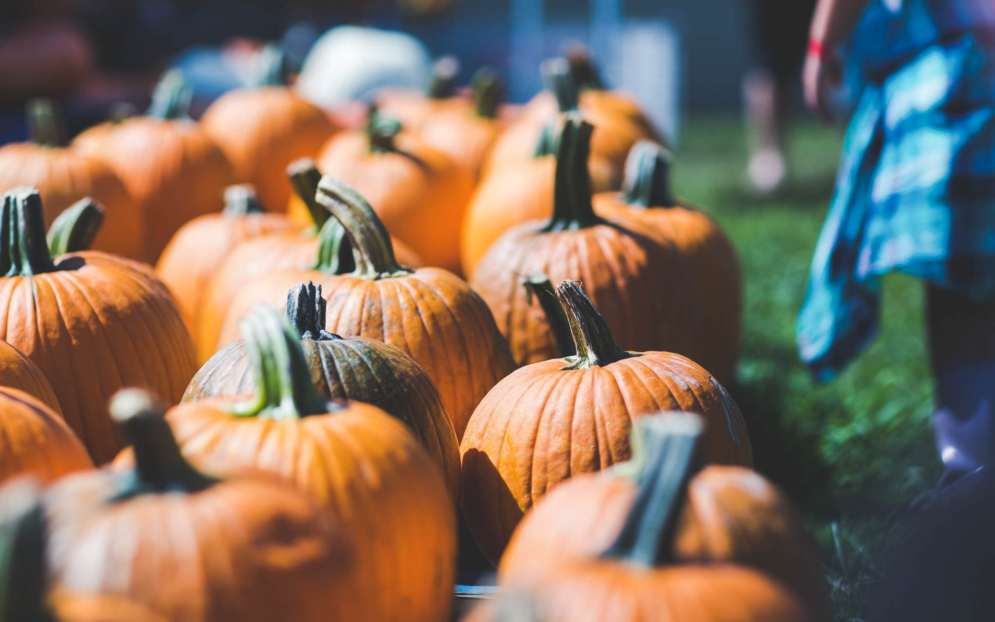 Pumpkin Picking - Grab the whole family and take a trip to a Virginia pumpkin patch this Fall!
