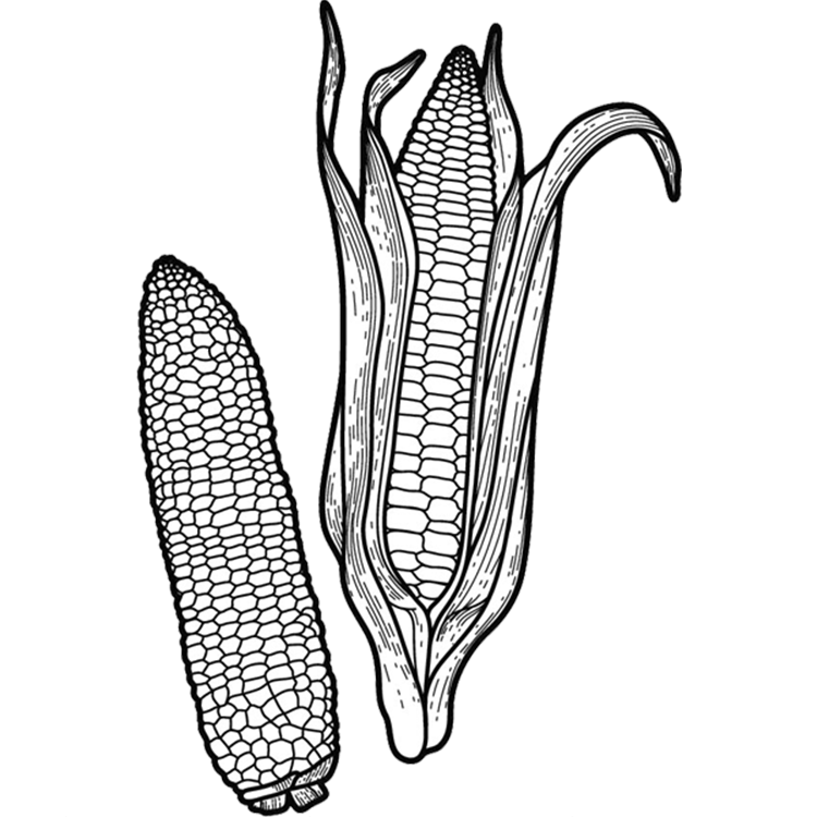Corn with Trans backgroung make page.png