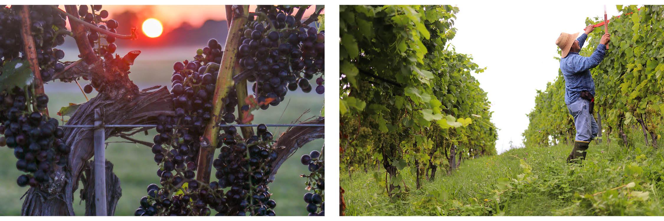 Images: Virginia Wine
