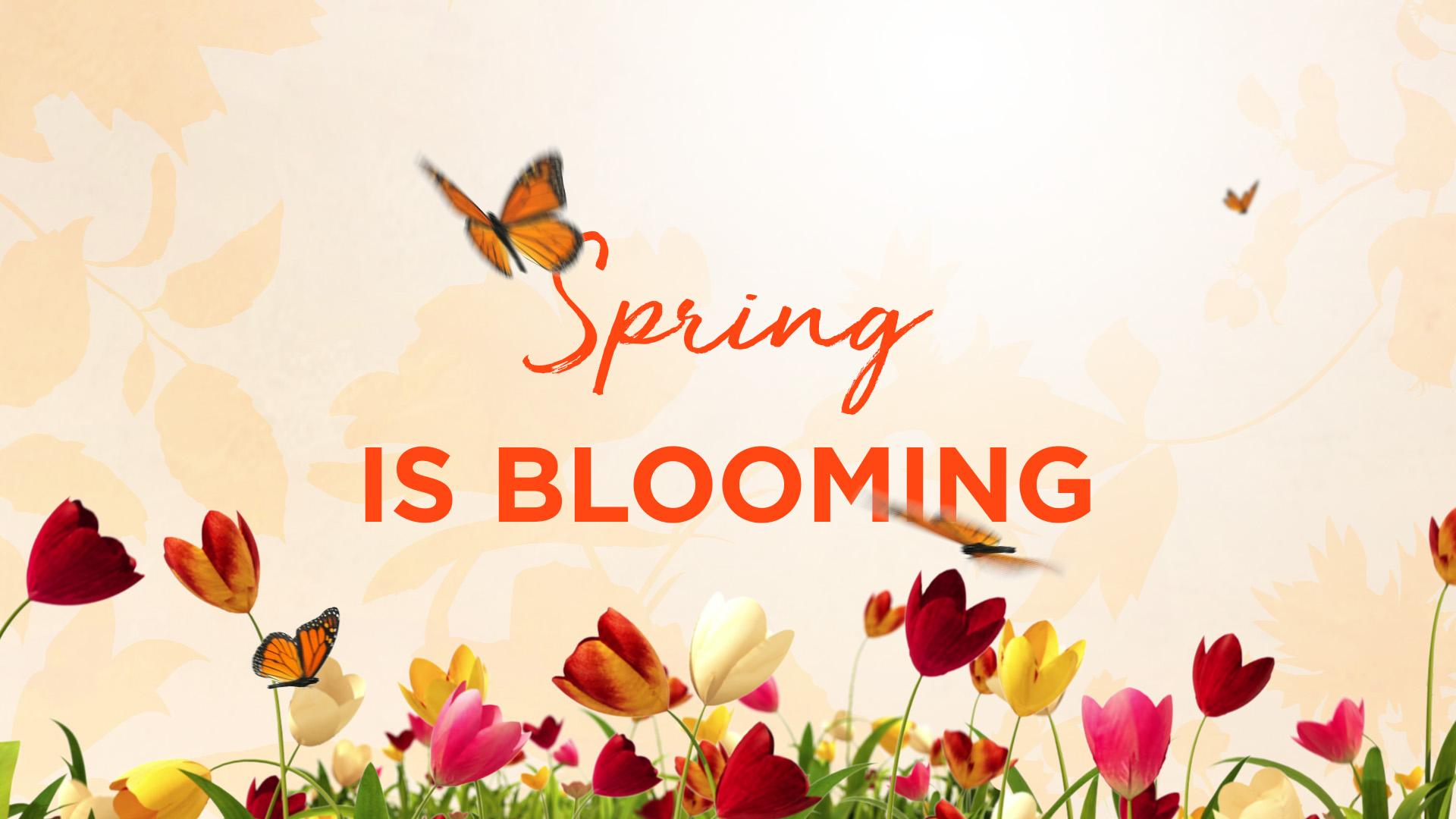 BBW_Spring3_P04.jpg