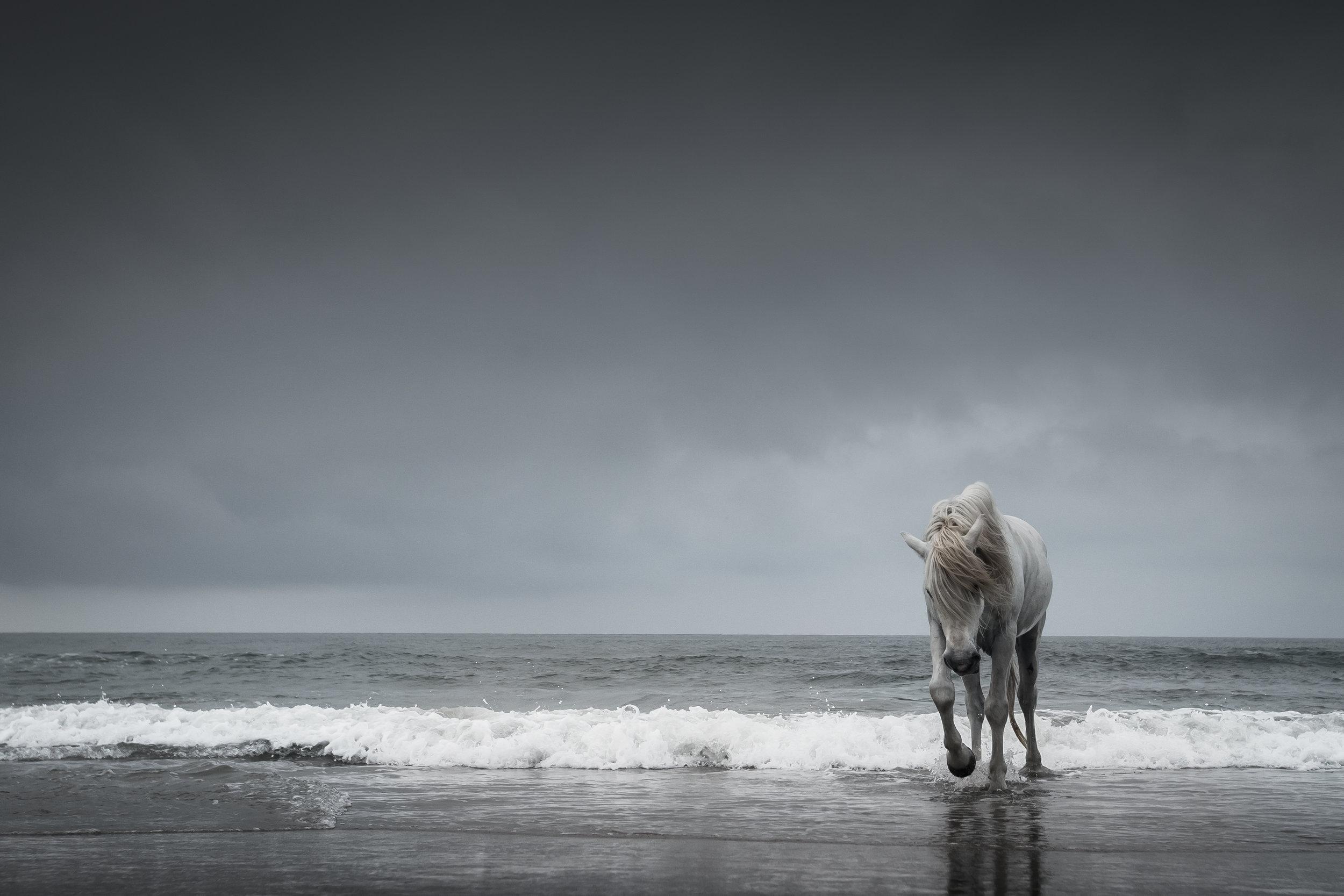 Sea Horses - Cheryll Snow