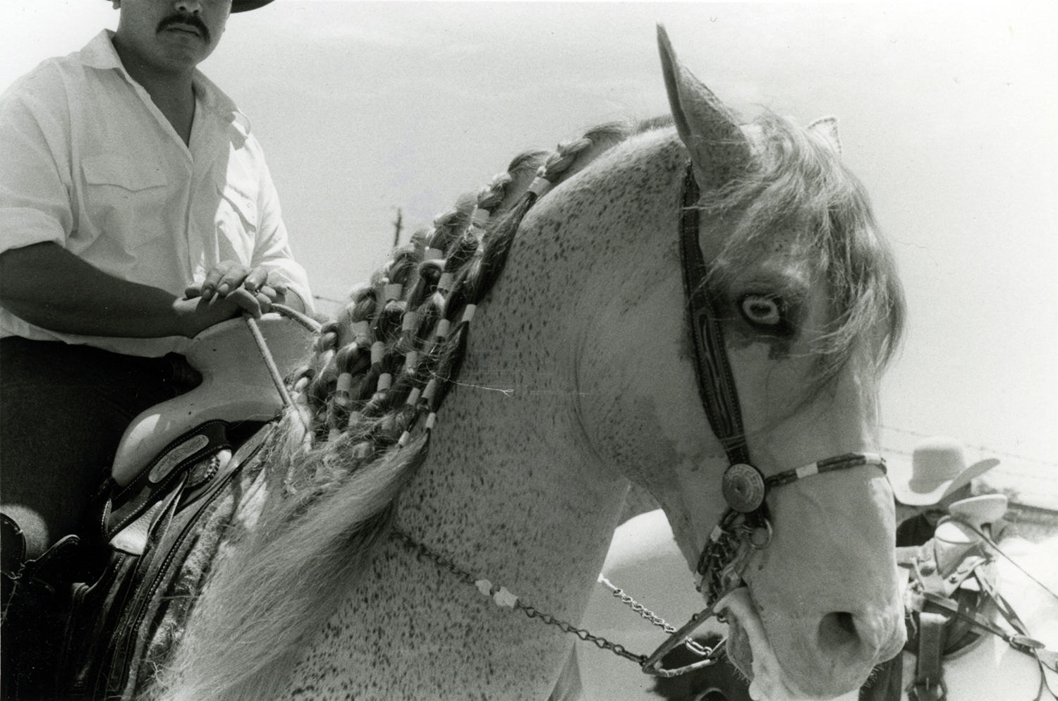 Vaquero With Horse With Plated Mane