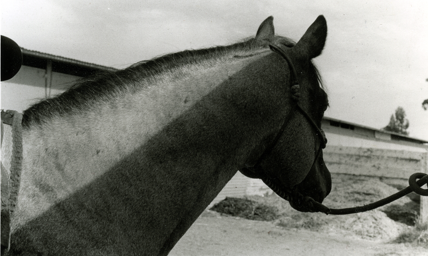 Horse In Partial Shade