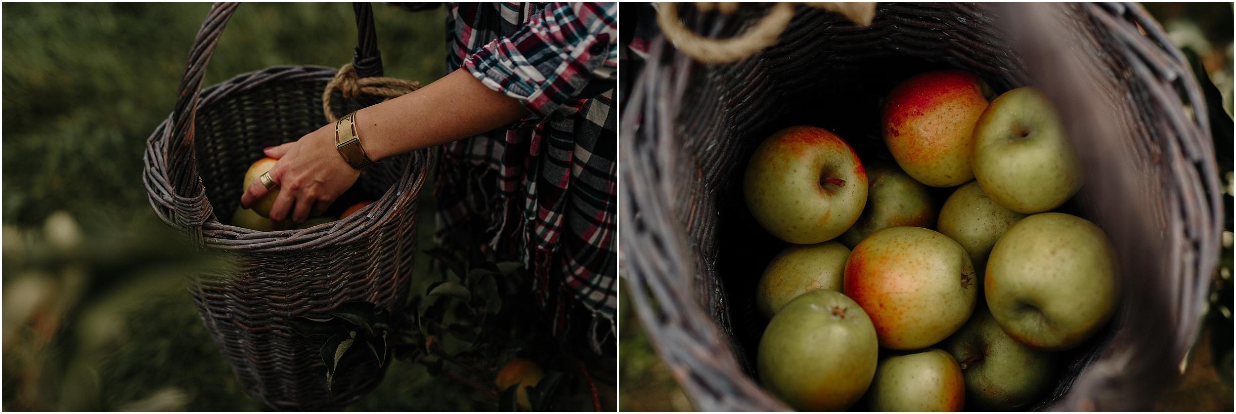 garwood.apple.orchard-28.jpg