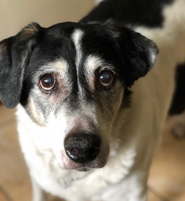 Our old friend Linus! #afriendinthewoods #petsitter #dogwalker #petsitting #dogwalking #jacksonvillepetsitting