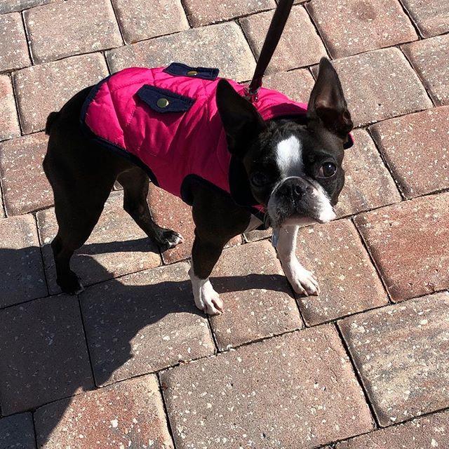 afriendinthewoods #petsitter #dogwalker #petsitting #dogwalking #jacksonvillepetsitting