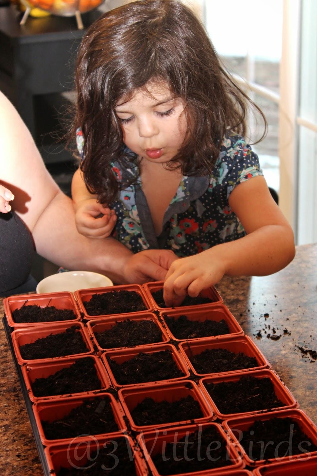 seeds10.jpg