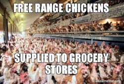 free range chickens in your store.jpg