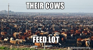 their-cows.jpg