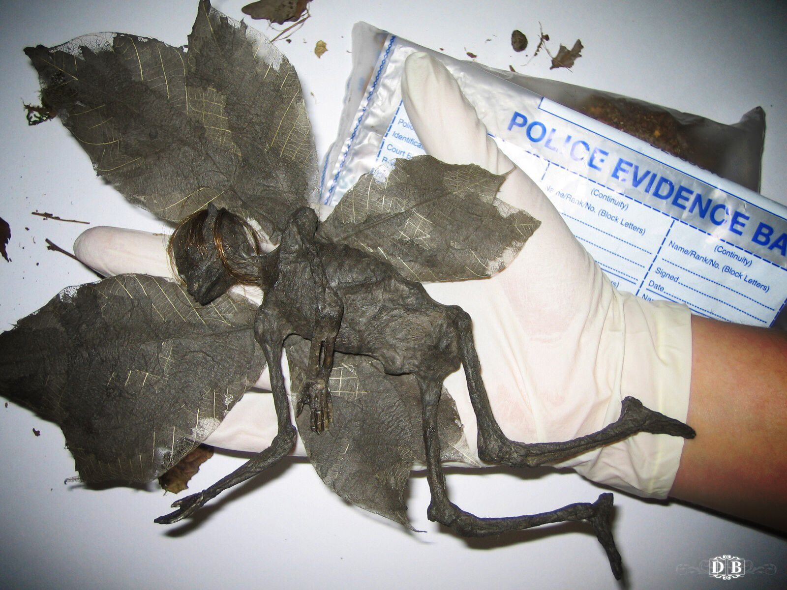 mummified_fairy_3.jpg