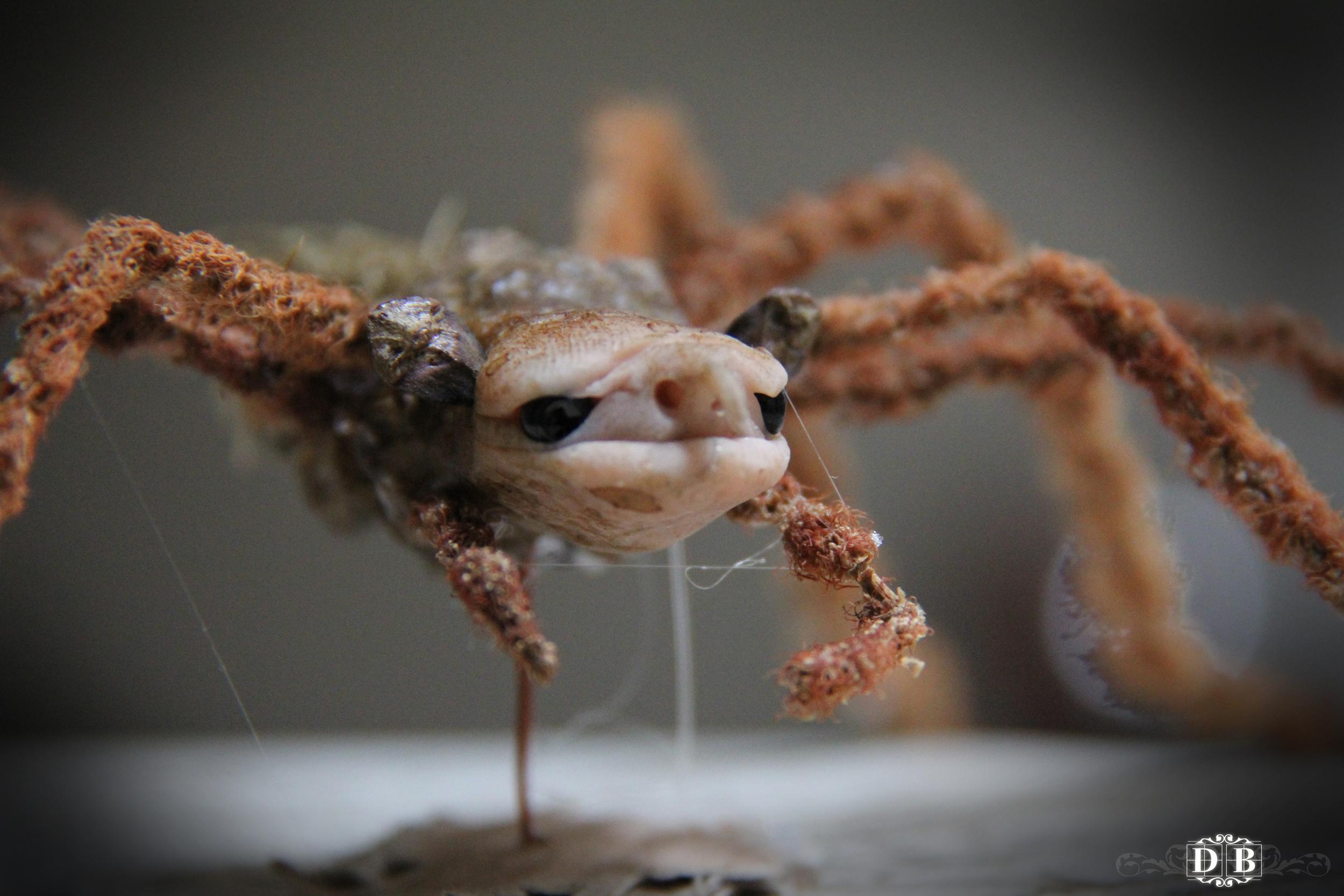Spiderling_1.jpg
