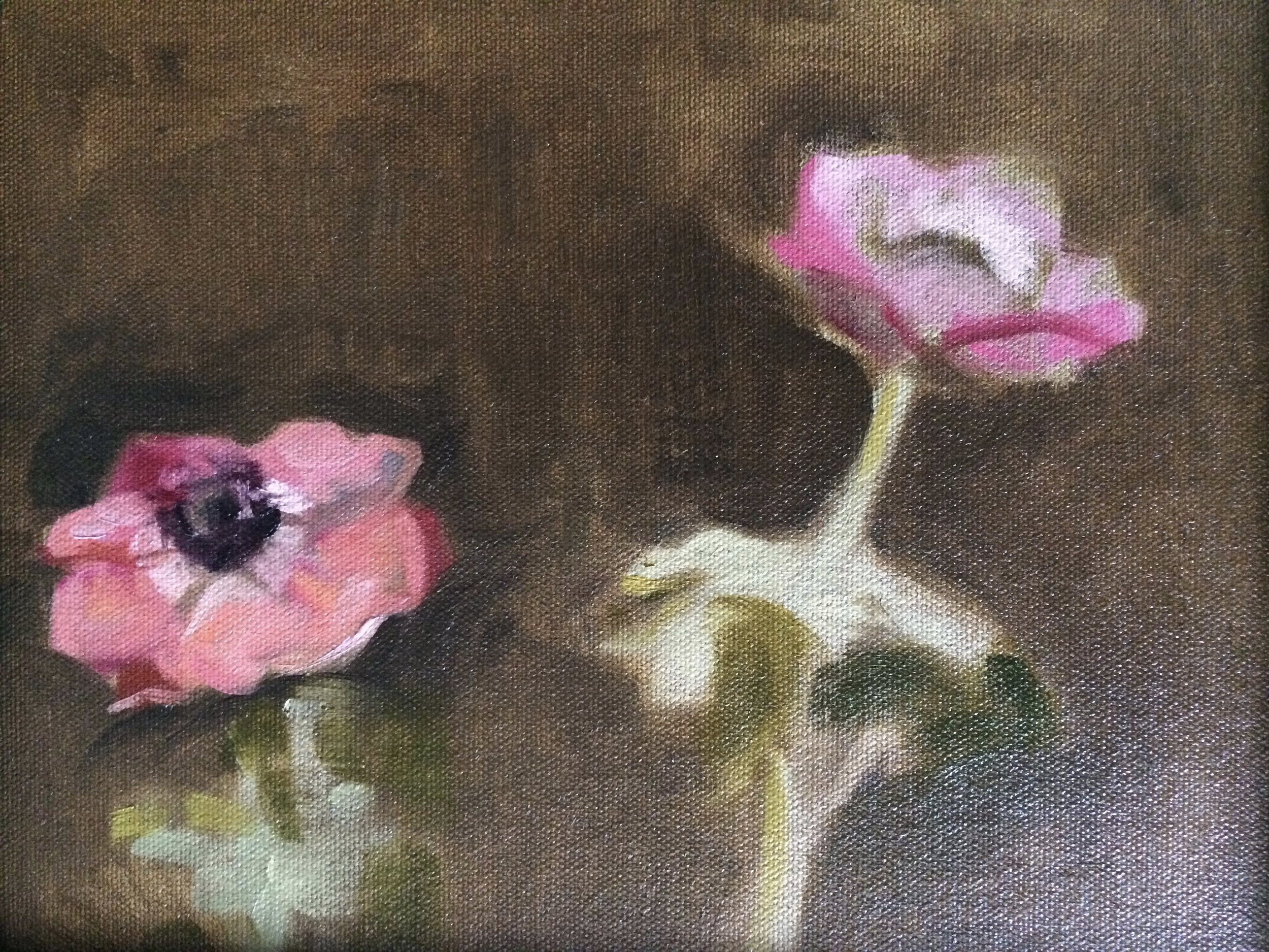 Quick study of poppies