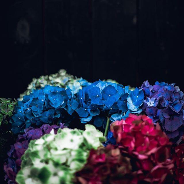 Wusstet ihr, dass die Hortensie oder Hydrangea Macropylla bereits jahrhundertelang in Japan kultiviert wurde, bevor sie 1790 zu uns nach Europa gelangte? #interior #derpranzl #blumen #flowersandmore #fairtrade #minimalistic #ennstal #irdning #hortensie #hortensien #hydrangeamacrophylla