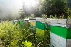 stock-photo-16967529-beehives.jpg
