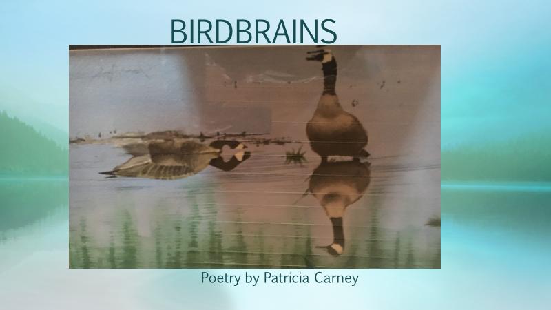 Birdbrains.png