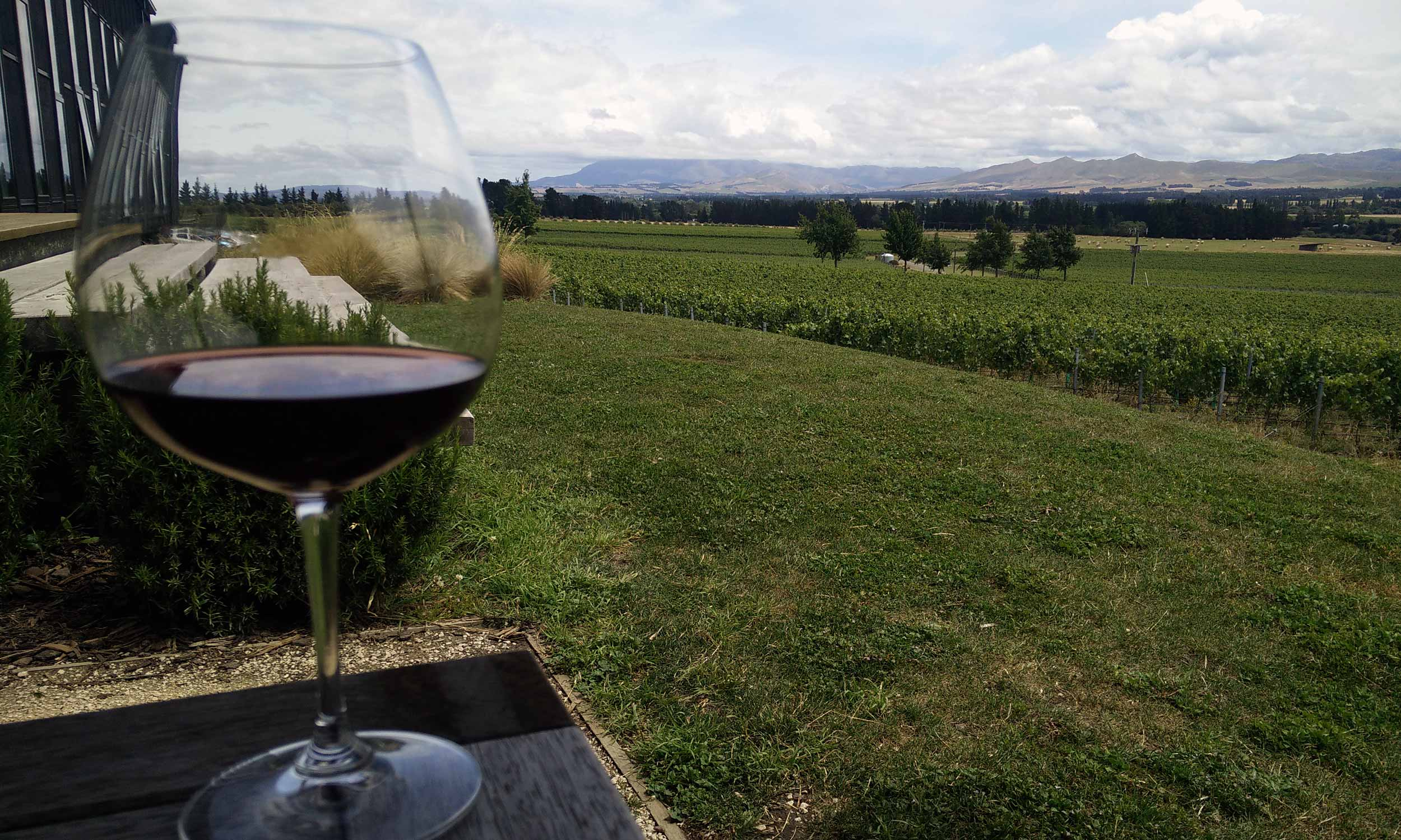 Red wine in Waipara, New Zealand