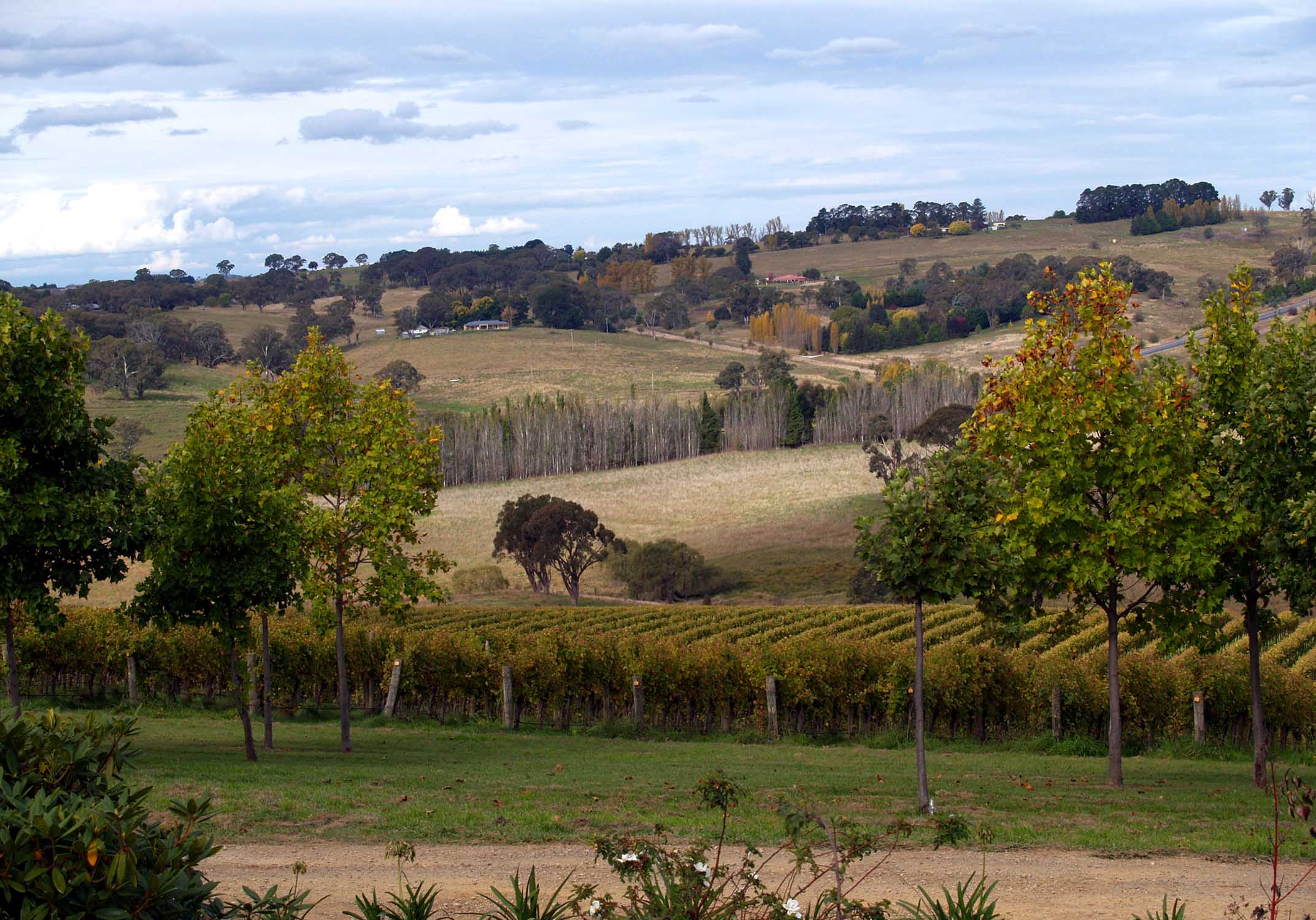 Vineyard scenery in Orange, New South Wales.