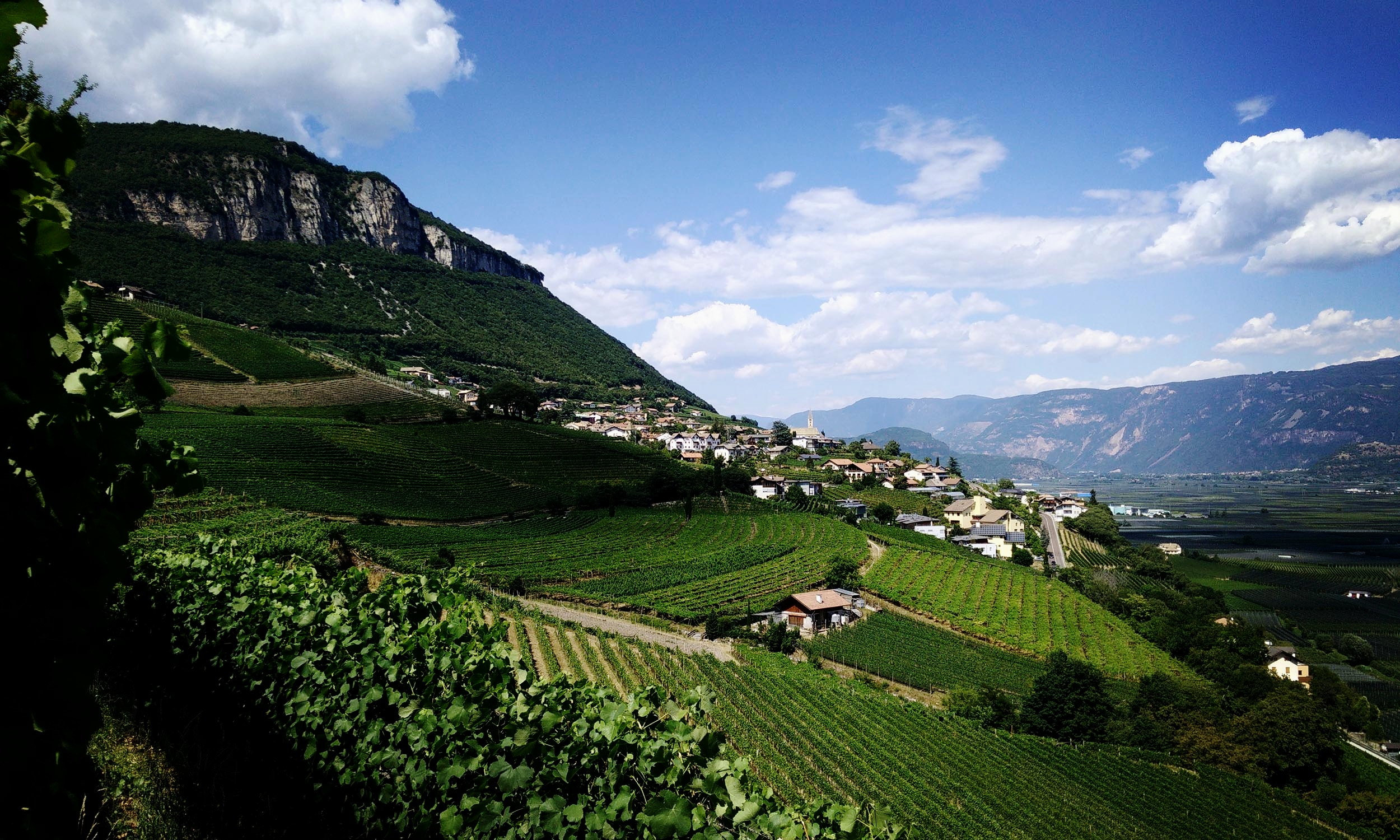 Vineyards in the Sudtirol
