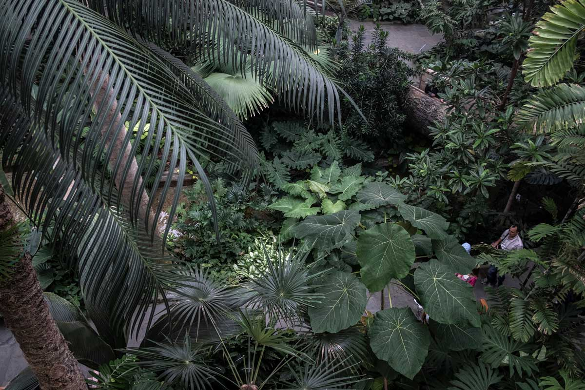 I love how plants are fractal and thus become difficult to interpret scale in photographs. Is this a tiny terrarium or a massive conservatory?