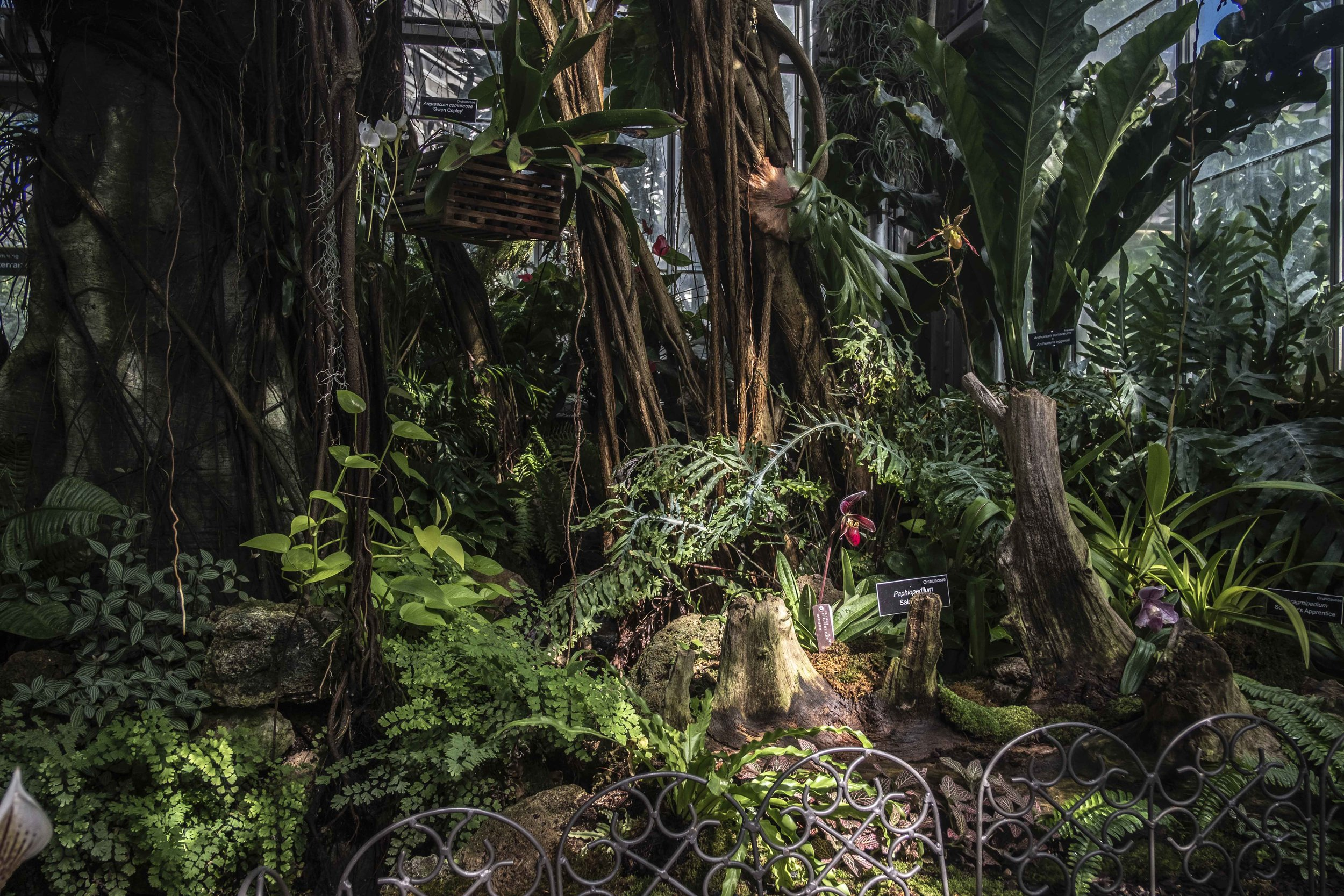 The orchid room is another place that just never translates into photos. There are blooming orchids surrounding you on all sides and the relatively small space makes it difficult to step back and show this magical little slice of jungly heaven.