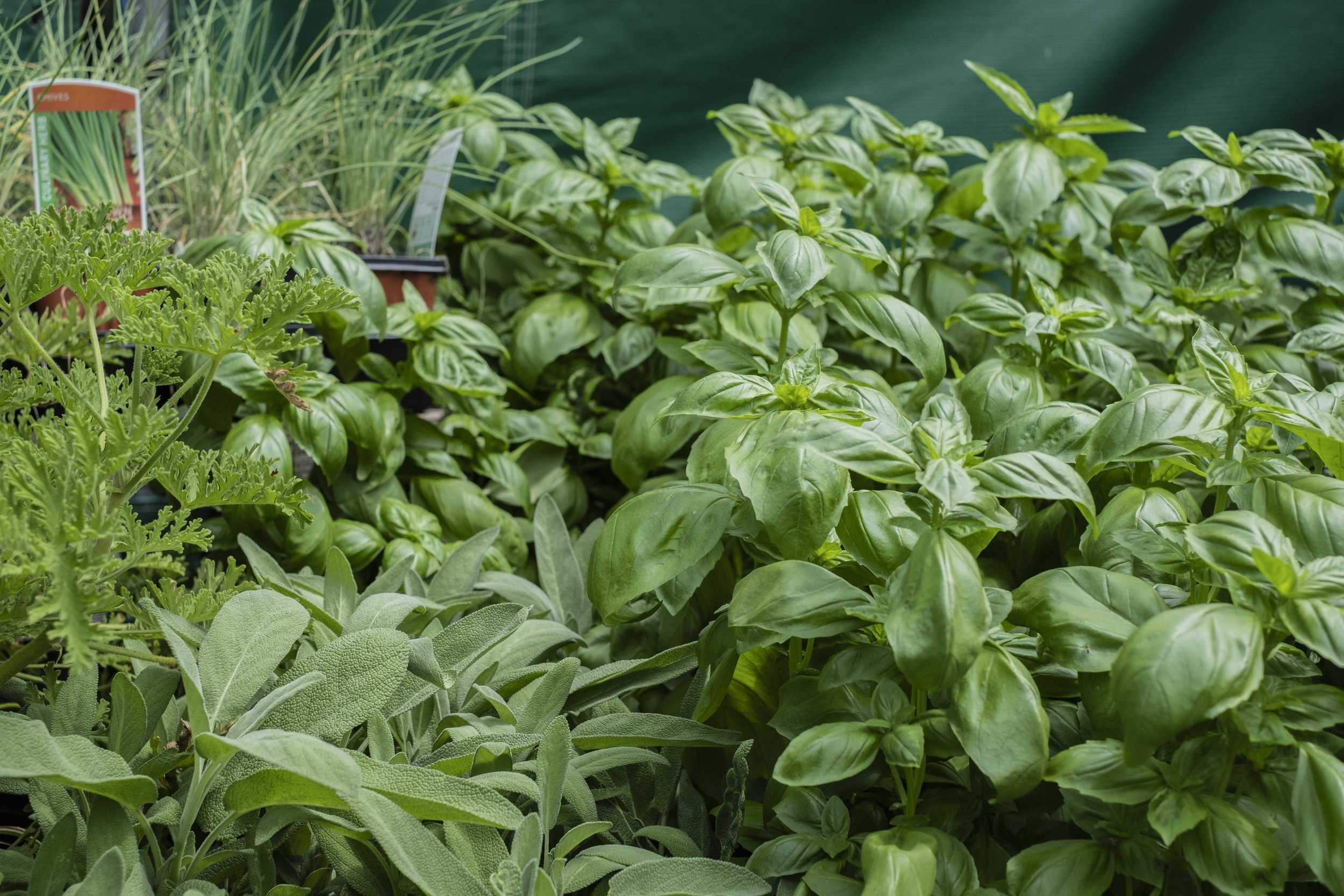 I have a long love of texture in photography. Seas of basil.