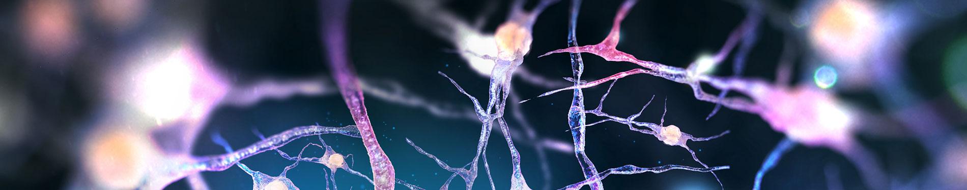 Objectively assesses the full spectrum of brain injury