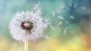 polen, alergia.jpg