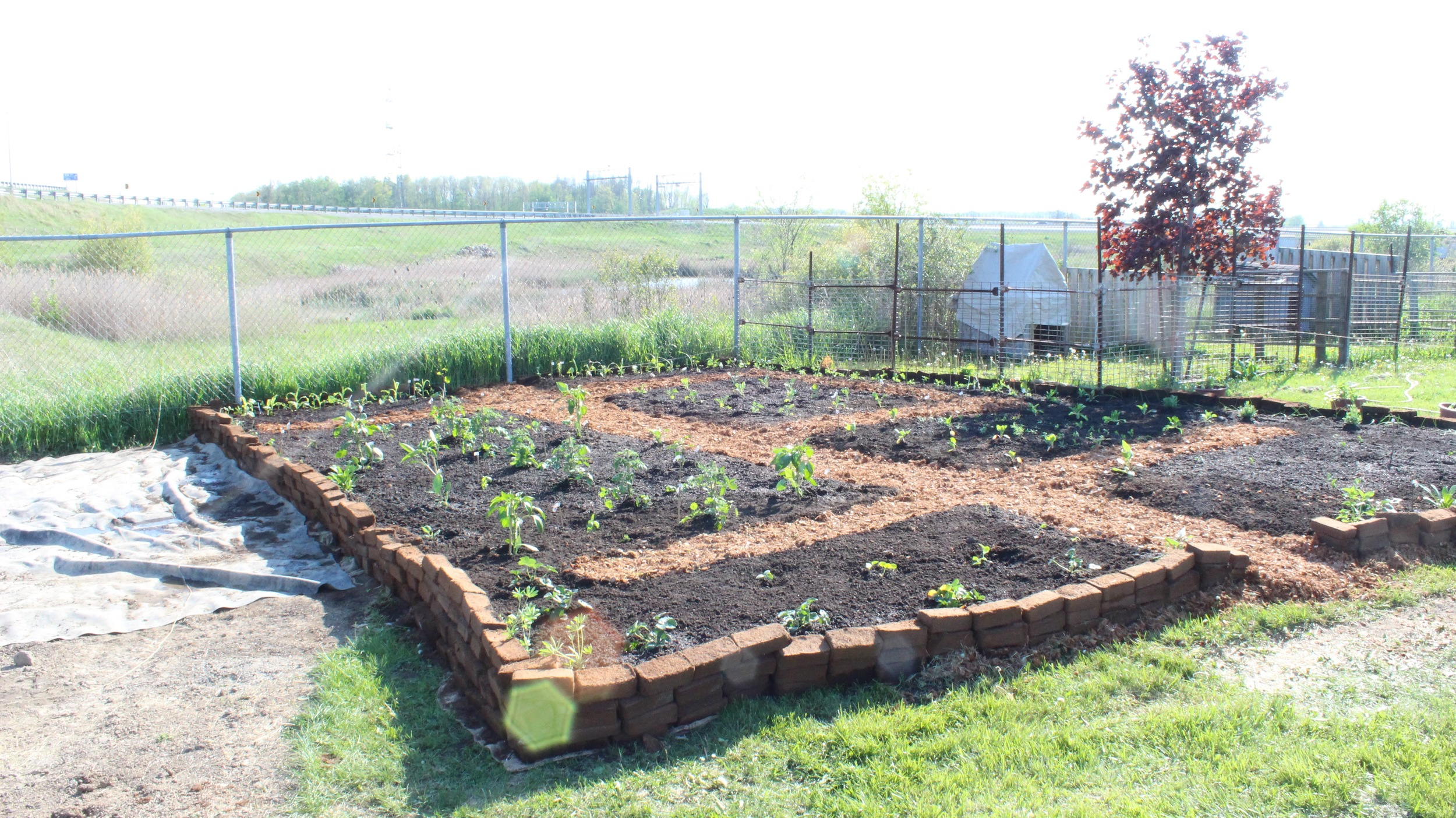 Compared to our Planting Day Event!(May 2016)