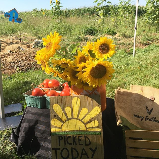 FARM HOP IS OPEN! 🌻🥙 We're hopping 'til 5PM, get the map from our website (link in bio)! Wristbands available in person so pick a spot and hop to it 💛 Location: Many Feathers Community Garden #manyfeathersfarmhop