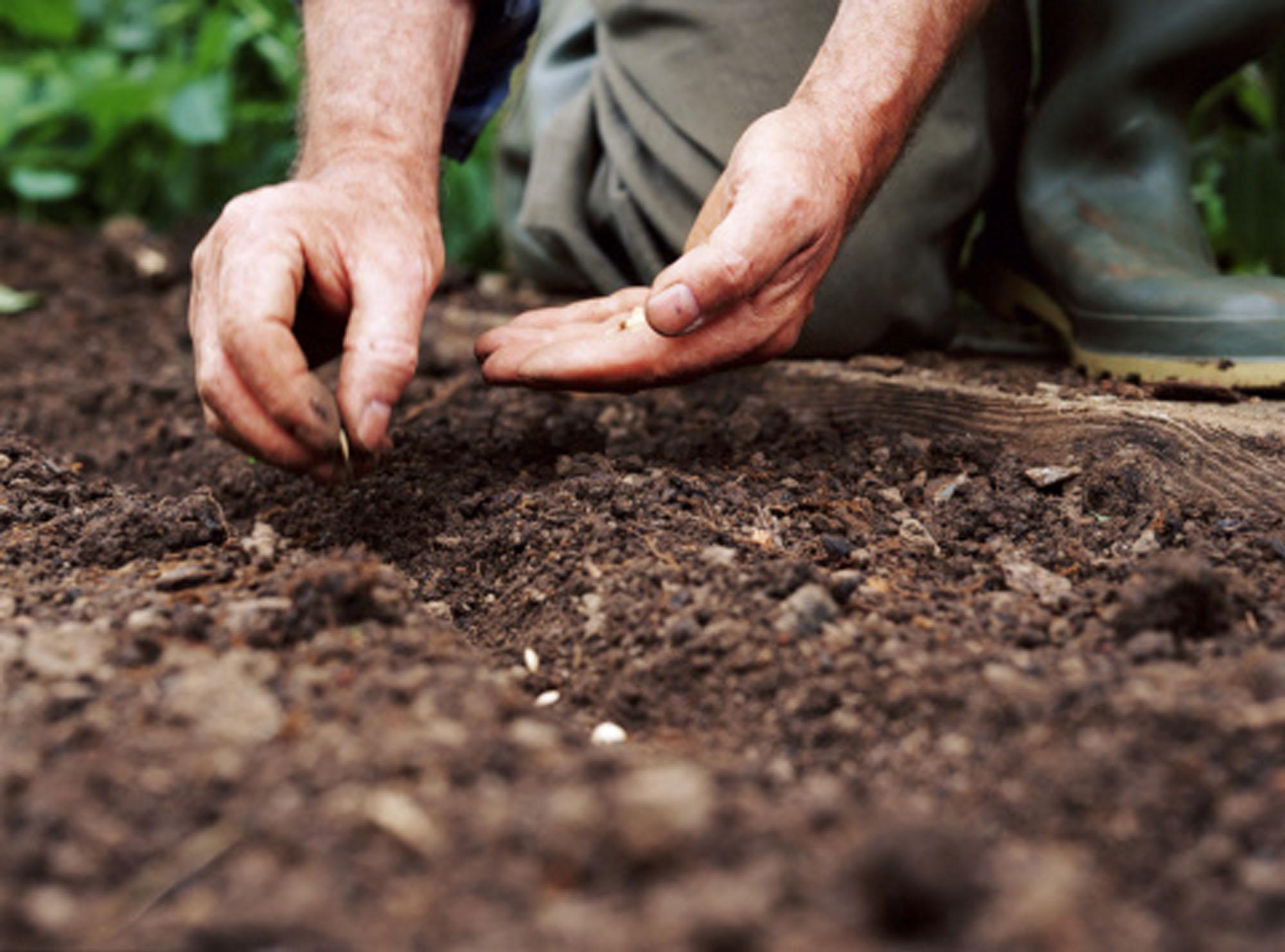 hands-planting_photo.jpg