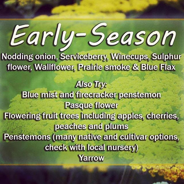 Early Season Pollinator Plants