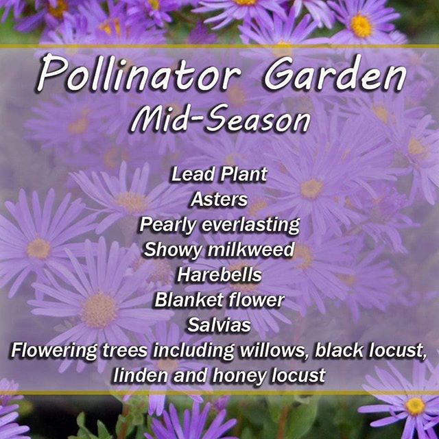 Mid Season Pollinator Plants.jpg
