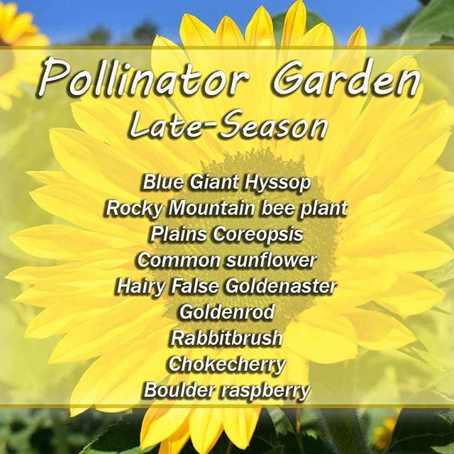 Late season pollinator plants.jpg