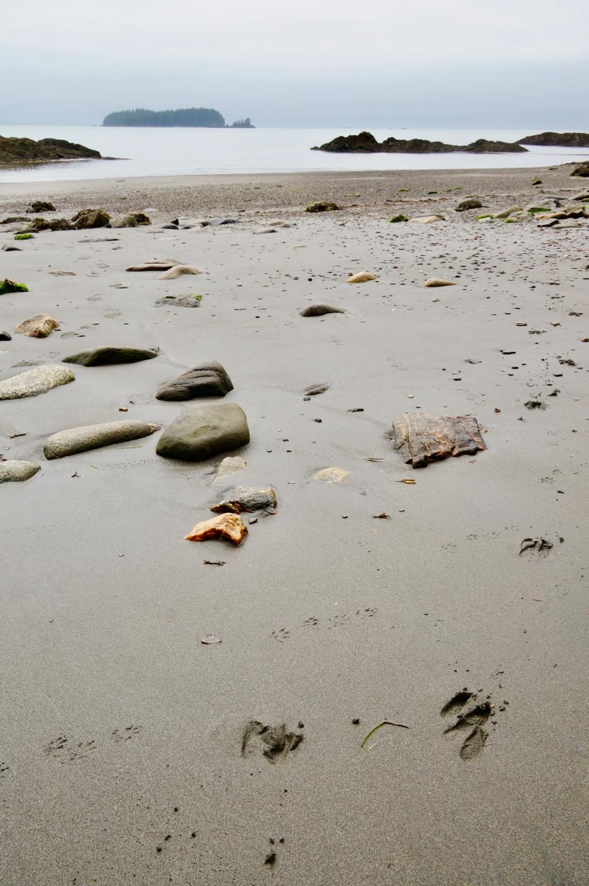 outer coast 2.jpg