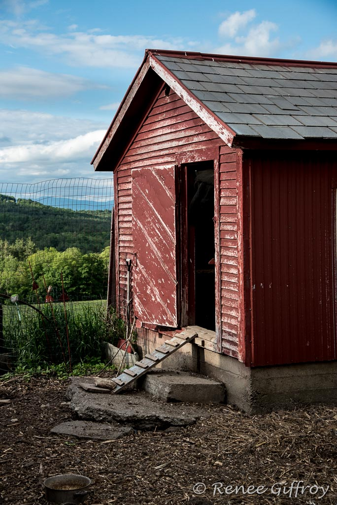 Bromley chicken coop hwith watermark-1.jpg