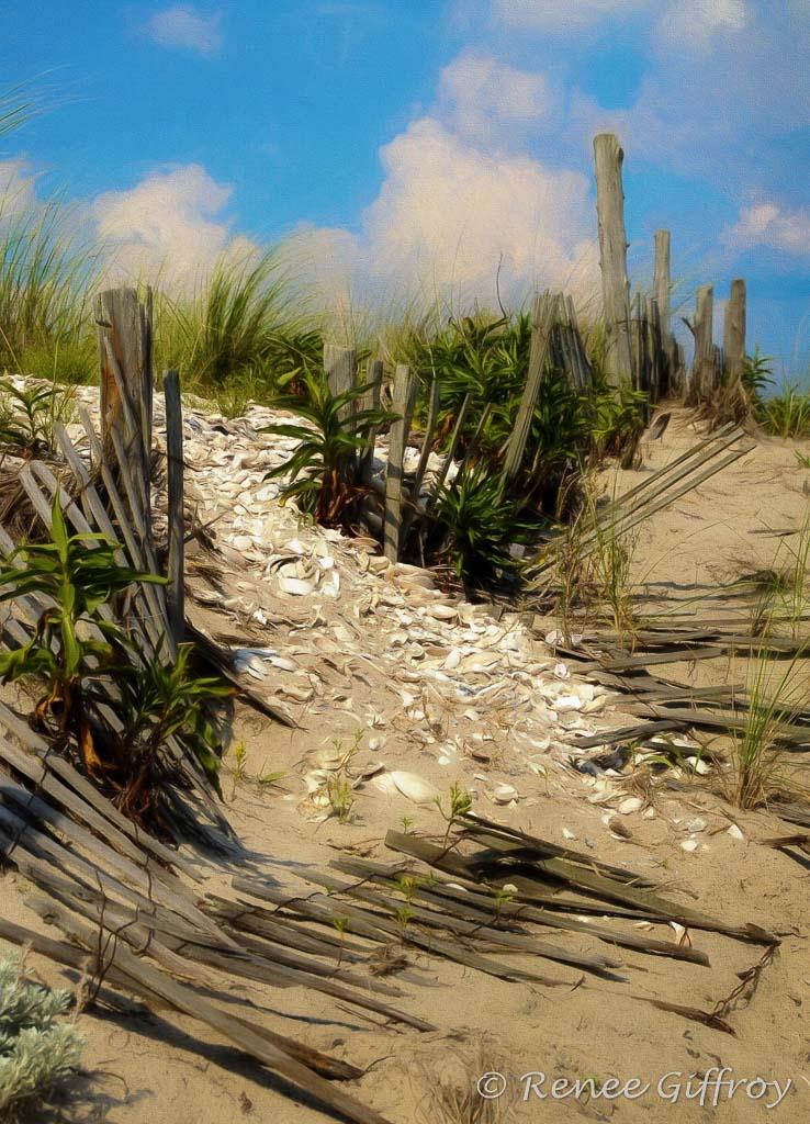 Dune with watermark-1.jpg