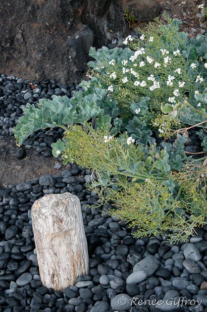 Oregon black stone beach-1.jpg