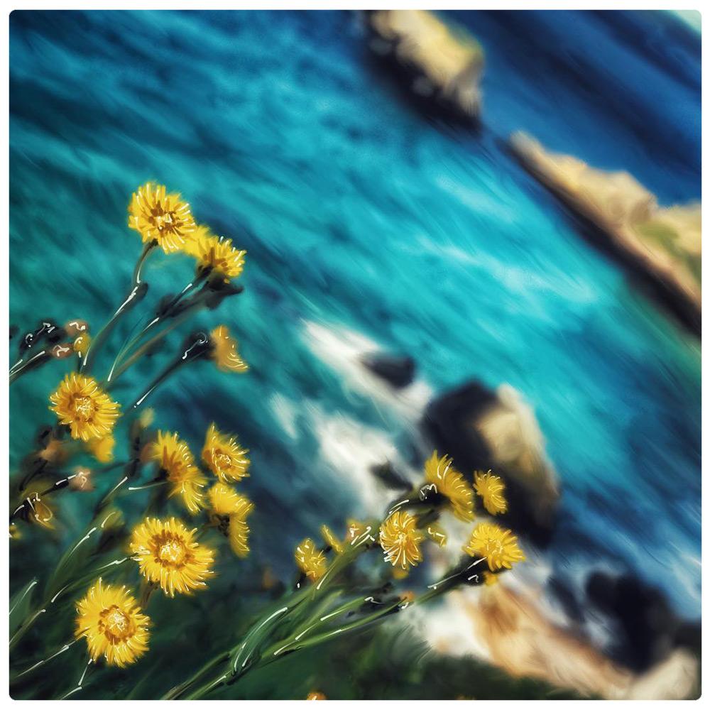 shane-acuff-art-albuquerque-flowers-ocean.jpg