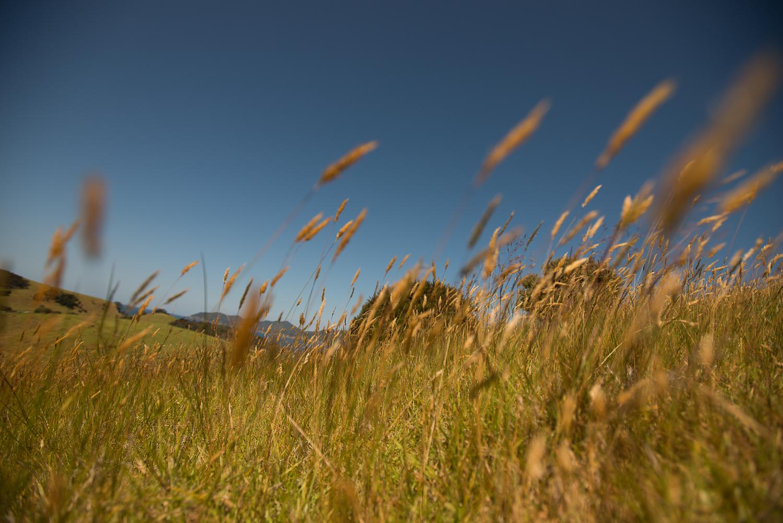 MNP_NZblog-2.jpg