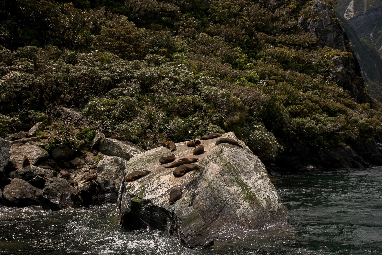 MNP_NZblog-4.jpg