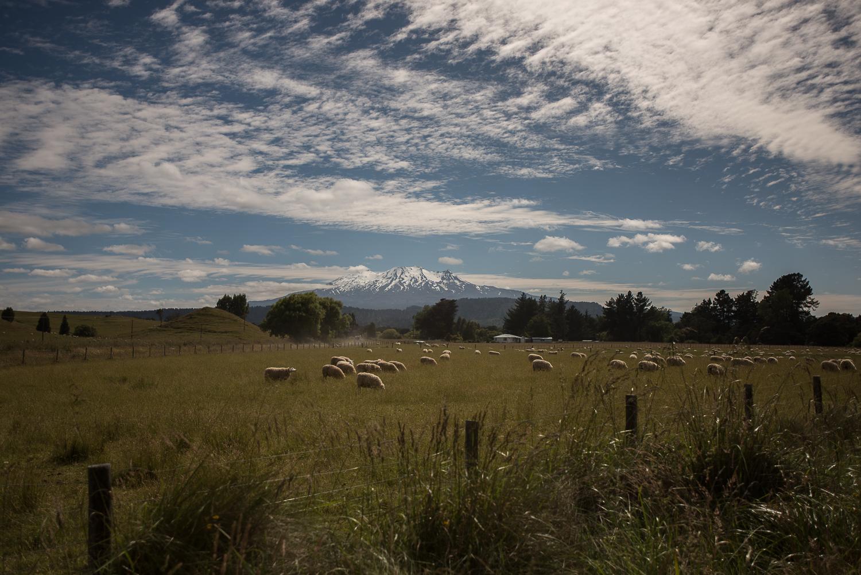 MNP_NZblog-21.jpg