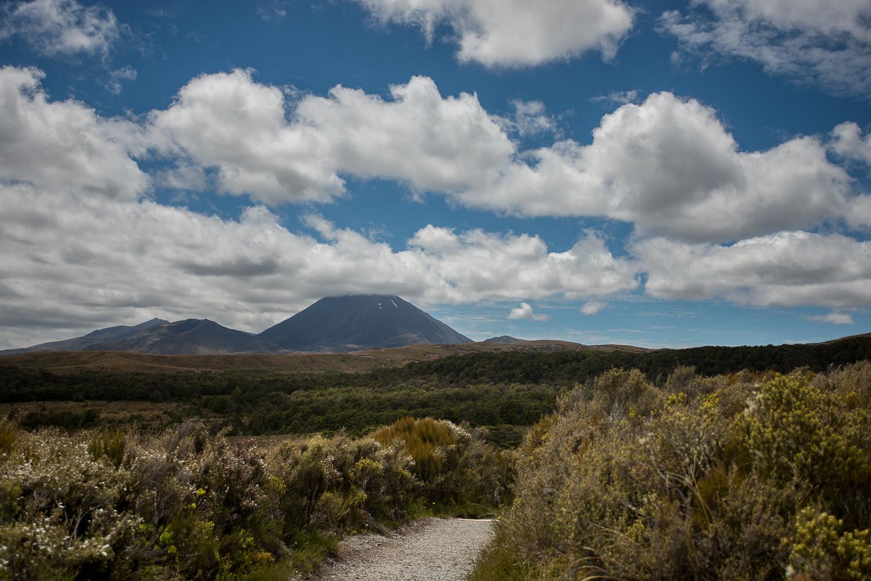 MNP_NZblog-26.jpg