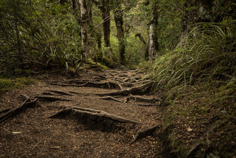 MNP_NZblog-27.jpg